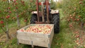 Adelanto de cosecha de manzana Granny Smith para Alto Valle