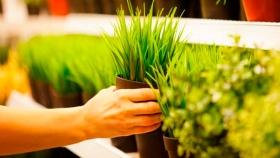 La jardinería y los tipos de plantas