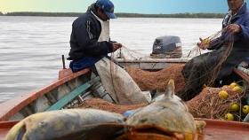 Frigoríficos de Santa Fe pagan menos de la mitad a pescadores por las bajas exportaciones