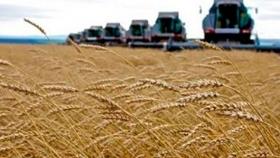 Australia: El trigo Anapurna muestra potencial para superar las 10tons/ha