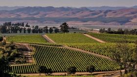 Estados Unidos: ofrecen US$100 a turistas que se alojen durante dos noches en un paraíso vitivinícola