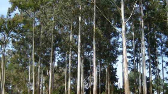 El Gobierno bonaerense presenta un plan de incentivos a la actividad forestal