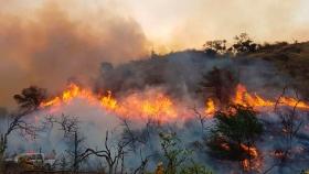 Impulsan proyecto para elevar hasta 25 años la pena por causar incendios forestales