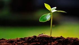 Microorganismos que potencian el rendimiento de plantas y suelos