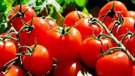 Los alimentos orgánicos se han puesto de moda en Reino Unido