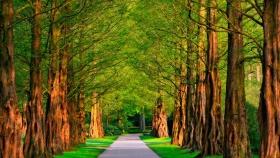 Los beneficios de los árboles en las ciudades