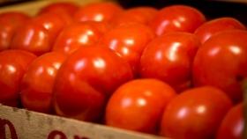 Tomate sin techo: es el producto que más aumentó de la cadena frutihortícola