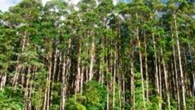 Agricultura entregó más de 287 millones de pesos al sector forestal en 2020
