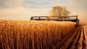 Según la BCSF, cayó la rentabilidad del trigo en el centro norte de Santa Fe