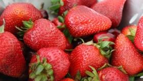 Frutillas: una fruta para disfrutar todo el año en la Argentina