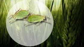 ¡Alerta plagas! Cómo controlar los cultivos de invierno