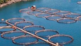 Cambio climático: dos razones para elegir el salmón y cuidar el planeta