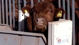 Tecnología inteligente para la ganadería de la mano del INTA