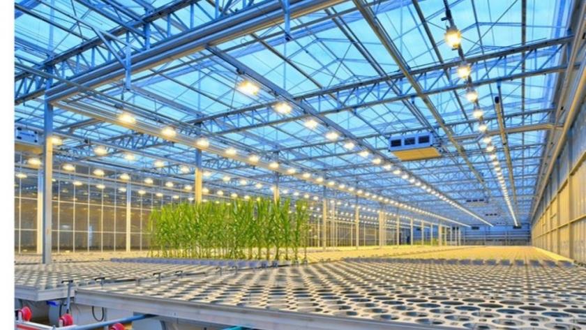 Breeding, un desarrollo de Bayer promete revolucionar la genética agrícola