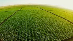 Tinte político manchó de incertidumbre el mercado de tierras agrícolas