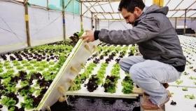 Apostó a la hidroponia y genera autoempleo con una propuesta llave en mano: ahora va por la energía y los bioinsumos