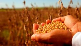 El Gobierno suspende el registro de exportaciones antes de subir las retenciones de la soja a 33%