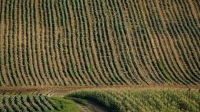 El grave problema oculto que enfrentan los innovadores agrícoloas de Canadá