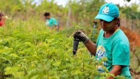 Los trabajadores sin tierra de Brasil persisten a través de la agroecología