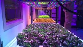 Espacio para crecer o crecer en el espacio: cómo las granjas verticales podrían estar listas para despegar