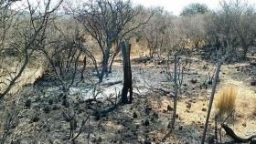 Pautas de manejo de ganado en zonas afectadas por los incendios