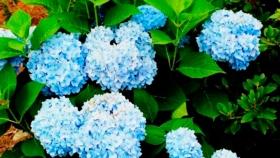 Plantas acidófilas: qué son, ejemplos y cuidados