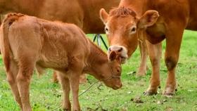 Aborto bovino: diagnóstico y control de pérdidas productivas