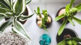 Sin químicos: con estos fertilizantes orgánicos podrías nutrir tus plantas de interior