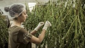 Cannabis medicinal para mujeres: algunos secretos exclusivos y beneficios