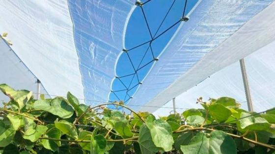 Nuevas soluciones para la protección de kiwi y cerezo