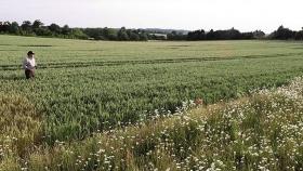 Un campo rinde más si se destina el 20% de su superficie a la vida silvestre