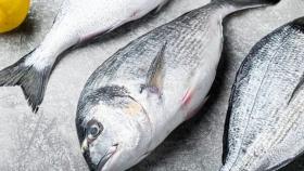 Investigadores demuestran que los peces marinos de crianza de la Unión Europea están libres de Anisakis