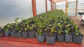 Potencian producción forestal con nuevo laboratorio de semillas en el vivero de Miramar