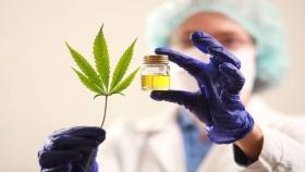 Cannabis, el nuevo objeto de estudio de la FAUBA