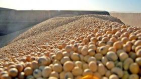 Divisas: las exportaciones agrícolas, ante el mejor agosto en diez años