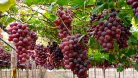 COVIAR presentó un plan para el crecimiento de las exportaciones