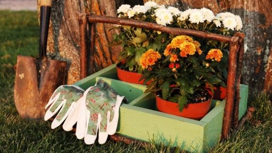 Un jardín de otoño sano