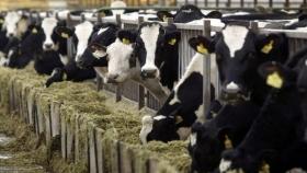 Claves para un correcto manejo de efluentes en la producción lechera