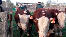 Gualeguaychú: Con las ventas en bovinos y ovinos culminaron los remates especiales