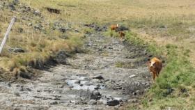 Ministerio de Ganadería extendió la Emergencia Agropecuaria por sequía
