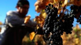 Falta de precio y crisis económica: los dos temas que preocupan a los productores de uva del Valle de Uco
