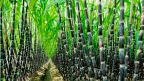 El norte quiere seguir usando biocombustibles