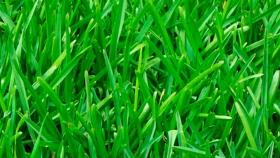 Cómo recuperar el pasto en primavera: 5 consejos