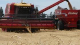 Récord: ventas anticipadas de trigo se duplicaron y fortalecen las expectativas de siembra