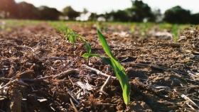 El zinc pide pista en los planes de fertilización