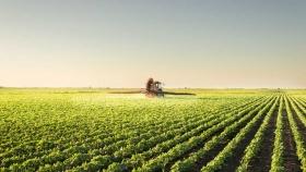 Las proyecciones para la soja y el maíz se resienten por la falta de agua