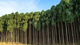 Se presentó CONFIAR, la iniciativa que busca fortalecer la cadena foresto-industrial argentina