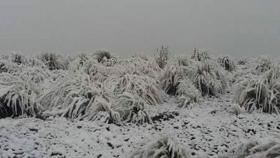 Descartan más nevadas en los valles; aseguran que lluvias fueron una bendición para la producción de granos