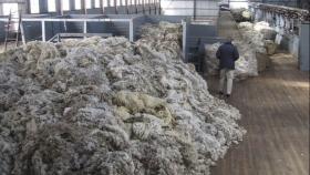 La Argentina podría volver a importar lana sucia de Chile para procesar y reexportar desde aquí
