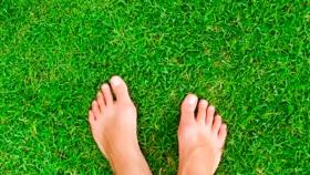 Cómo sembrar césped y conseguir un jardín increíble